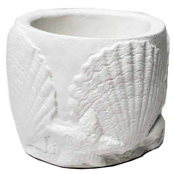Plaster Paint Seashell Cup